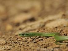 Ostatnie chwile pewnego pechowego węża w Boliwii